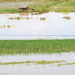 Cultivos quedaron en medio del agua.