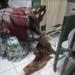Madre dio a luz en el piso del hospital de Juli