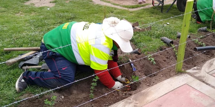 Municipalidad viene realizando trabajos de reforestación.