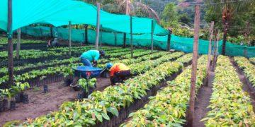 Sector agropecuario creció más de 2% en el 2019.