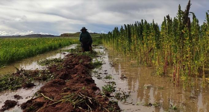 Cultivos de quinua inundado por el desborde de ríos.