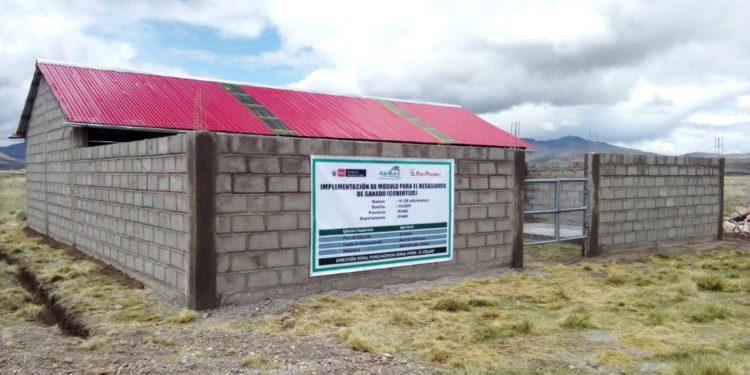 Minagri anuncia inversión de S/ 50 millones para implementar cobertizos en 12 regiones. (Andina).