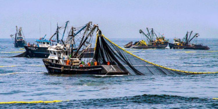 Produce suspenderá desde mañana 27 de febrero, y por un periodo de 10 días hábiles, las actividades extractivas del recurso anchoveta y anchoveta blanca.