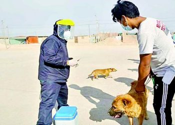 Buscan prohibir el ingreso de canes y venta de animales por 60 días en el distrito de Majes