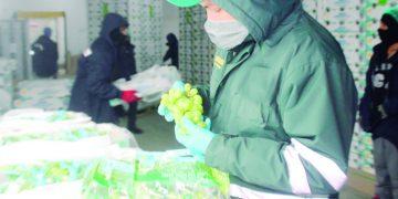 Productores de Arequipa exportaron más de 9 mil toneladas de uva en campaña 2020-2021