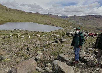 Castilla: GRA gestionará financiamiento para proyecto agropecuario en Chachas