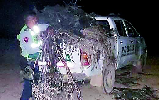 Decomisan 200 kilos de algas marinas extraídas de forma ilegal para su venta en Camaná