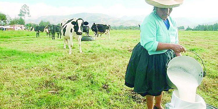 Ganaderos no pueden trasladar toneladas de leche debido a paro de transportistas