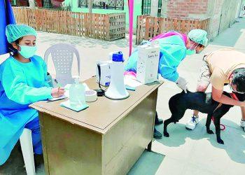 Hoy y mañana realizarán campaña de inmunización contra la rabia a mascotas en Majes