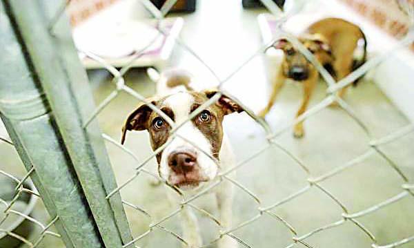 Majes iniciará campaña de eutanasia para perros callejeros tras casos de rabia