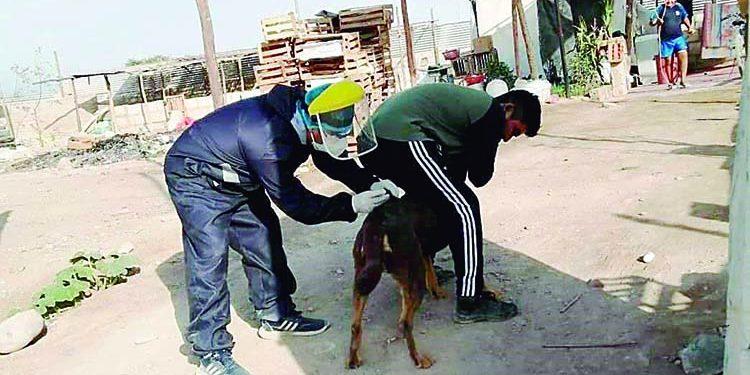 Se incrementa a cinco los casos de canes con rabia en Majes