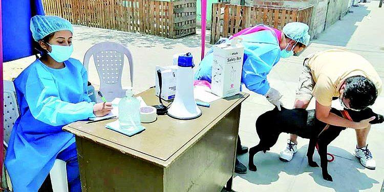 Seis mil dosis contra la rabia para vacunar a canes desde el 4 de abril en El Pedregal
