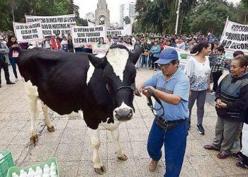 Un incremento mínimo de 20 céntimos se necesita para salvar la ganadería lechera nacional