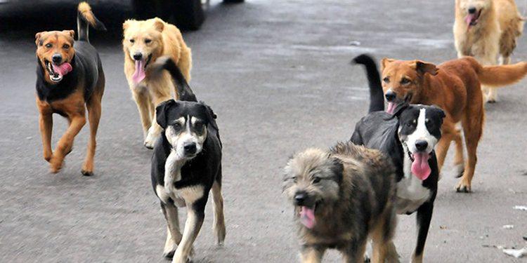 Arequipa: Multa de S/4.400 para vecinos irresponsables que dejen a sus perros en la calle