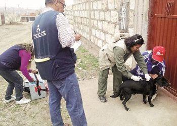 Microrred de Salud El Pedregal pide apoyo para erradicar rabia en Majes