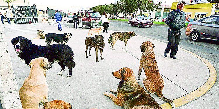 30 mil perros serán vacunados en Cerro Colorado tras incremento de casos de rabia
