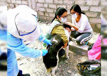 Más de 20 mil canes serán vacunados contra la rabia en Cayma