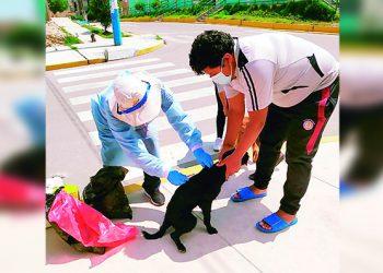 Arequipa: Geresa vacunará contra la rabia a 27 mil canes en Cerro Colorado