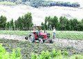 Agricultores de Arequipa pueden acceder a seguro por daños en sus cultivos