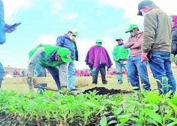 Arequipa: Créditos de Agrobanco continúan brindándose y esperan que apoyo prosiga