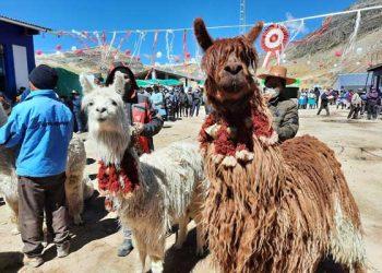 Distrito de Corani apuesta por la mejor fibra de alpaca del mundo con tecnología