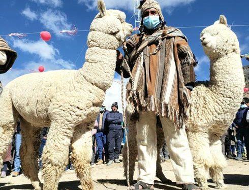Día de la alpaca enrostró las complejas necesidades que no son cubiertas en el sector
