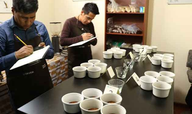 12 cafetaleros puneños compiten con cafés especiales en certamen nacional