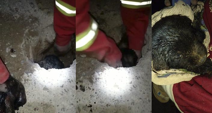 Bomberos rescatan a cachorro atrapado en un tubo de desagüe en la Ciudad del Lago