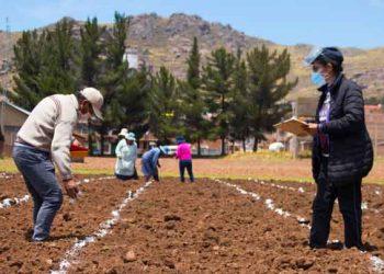 Puno: Midagri implementa banco de germoplasma de la quinua en la región