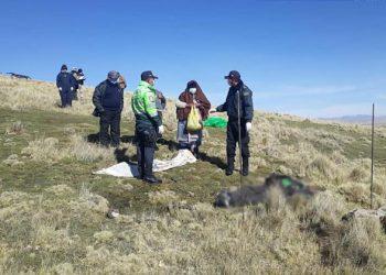 Azángaro: Rayo mata a ganadero de Potoni mientras realizaba labores de pastoreo